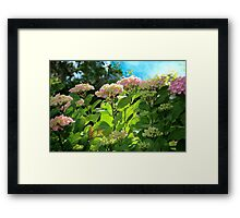 Hydrangea Morning Framed Print