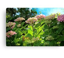 Hydrangea Morning Canvas Print