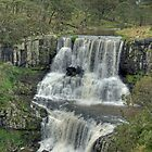 Ebor Falls, Northern NSW, Australia by Adrian Paul