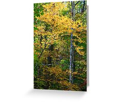 FALL COLOR AND SYCAMORE Greeting Card