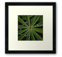 Wet lupin leaf Framed Print