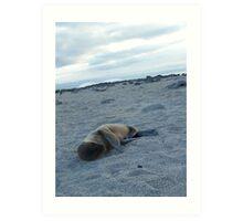 Baby Seal on the Beach - Galapagos Art Print