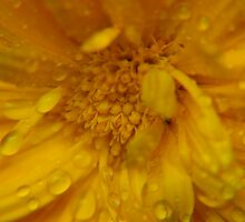 each petal...rain drops sparkling in the morning light by byzantinehalo
