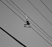 Bird On A Wire by Eric Scott Birdwhistell
