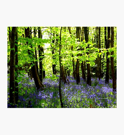 The Enchantment of Bluebells Photographic Print