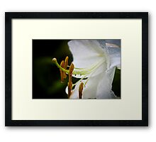 Lily After the Rain - Thuya Garden Framed Print