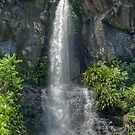 Toolona Falls, Lamington National Park, Queensland, Australia by Adrian Paul