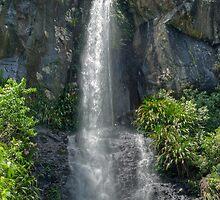 Toolona Falls, Lamington National Park, Queensland, Australia by Adrian Paul
