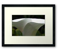 Lily Veins - Longwood Gardens Framed Print