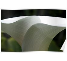 Lily Veins - Longwood Gardens Poster