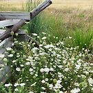 August Meadow by AngieDavies