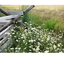 August Meadow Photographic Print