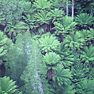 Tree Fern Gully by Michael John