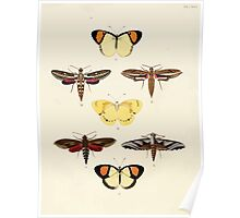 Exotic butterflies of the three parts of the world Pieter Cramer and Caspar Stoll 1782 V2 0106 Poster