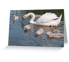 Mama Swan and Babies Greeting Card