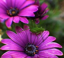 In my Garden by yolanda