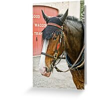 The Shire Horse Greeting Card