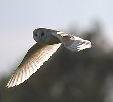 Close Encounter with a Barn Owl by shutternutter