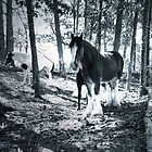 """""""A Shady Grove So Long Ago"""" by franticflagwave"""