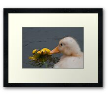 Stop and Smell the Flowers: Yellow Mallard Duckling Framed Print