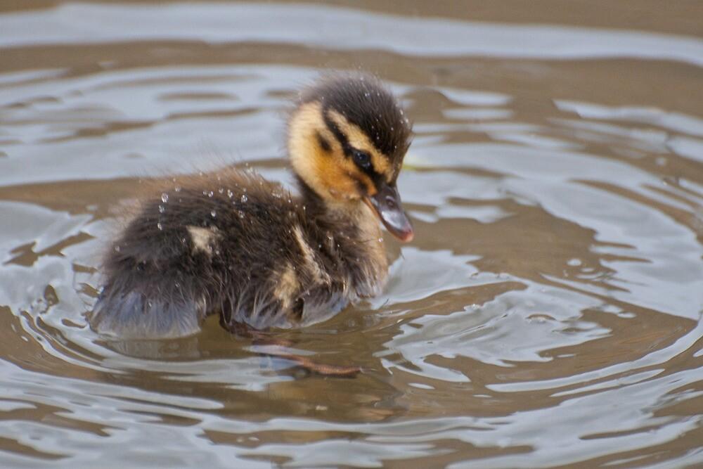 Little Mallard Duckling by Ann Miller