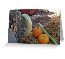 Pumpkins and Snake Gourds Greeting Card