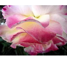 Perfumed Caress Photographic Print