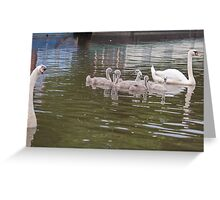 Papa Looks on: Mute Swan Family on Canal Greeting Card