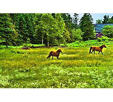 Classic Country Photographic Print