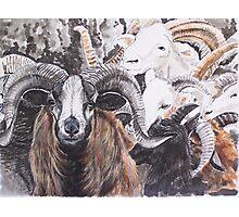 Ram Patterns Photographic Print