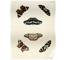 Exotic butterflies of the three parts of the world Pieter Cramer and Caspar Stoll 1782 V1 0344 Poster