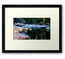 frosty swamp Framed Print