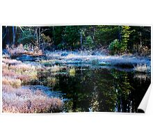 frosty swamp Poster