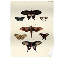 Exotic butterflies of the three parts of the world Pieter Cramer and Caspar Stoll 1782 V2 0116 Poster