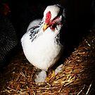 Fancy Chicken by DeannaLyn