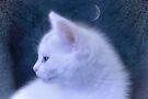 White Kitten at Night by Elaine  Manley