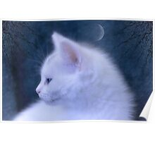 White Kitten at Night Poster