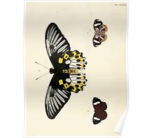 Exotic butterflies of the three parts of the world Pieter Cramer and Caspar Stoll 1782 V2 0148 Poster