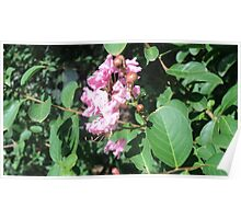 pink flower and berries Poster