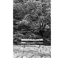 Bench in Snow Photographic Print