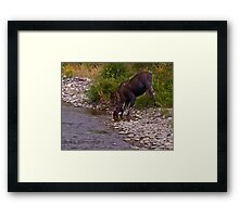 Thirsty Moose Framed Print