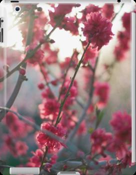 spring blossoms by Jennifer Kutzleb