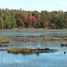 Wetlands of the Adirondack Mountains by linmarie