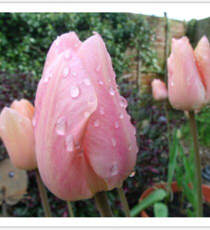 peach tulip Sticker