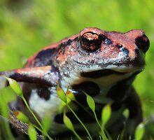 frog macro by shatterkite