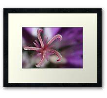 A Little Pink in a Purple World Framed Print