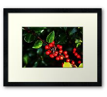 Little red holly berries.... Framed Print