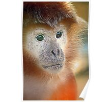 Treacle coloured monkey Poster