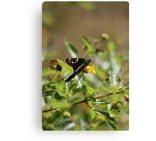 October Fun Canvas Print