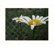 Be a Spiritual Gardener  Art Print